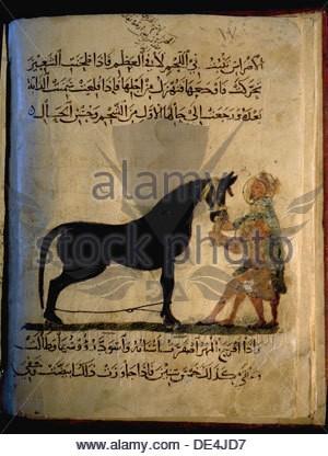 illustration-from-nihayat-al-sul-a-mamluk-manual-on-horsemanship-de4jd7.jpg